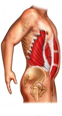 abdominal-muscles-side-view