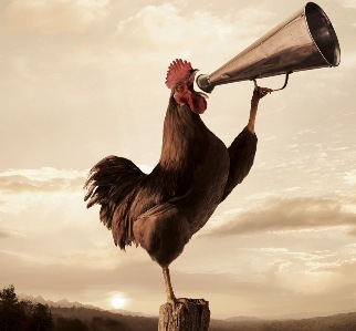 goodmorning-rooster-crowing