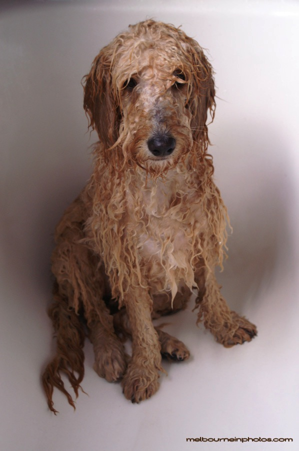Unhappy-Wet-Dog-1-Fork-Party