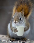bright-eyed-bushy-tailed-coffee-loving