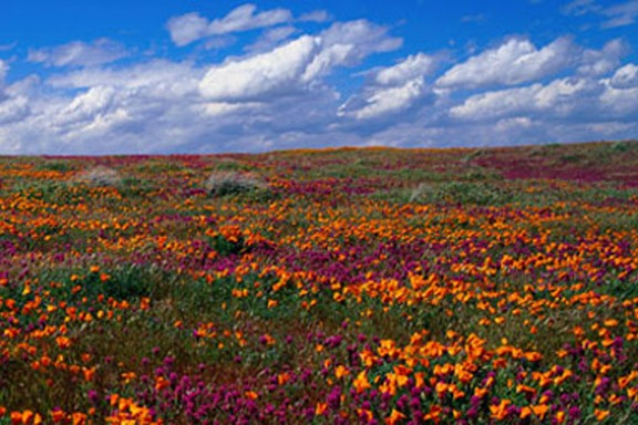field_of_flowers_wall_mural
